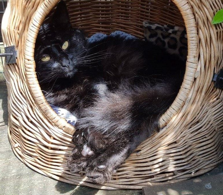 Sooty – rehomed