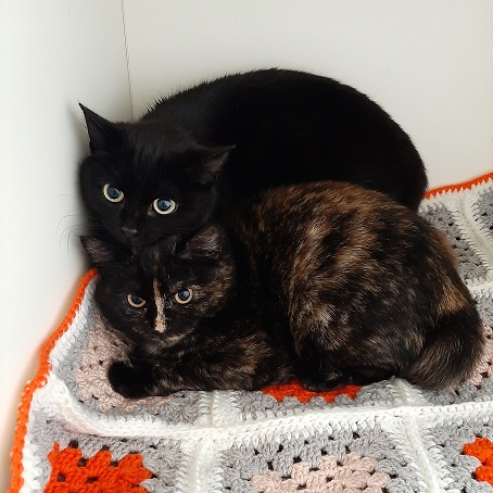 SPICEY AND PAM – RE-HOMED