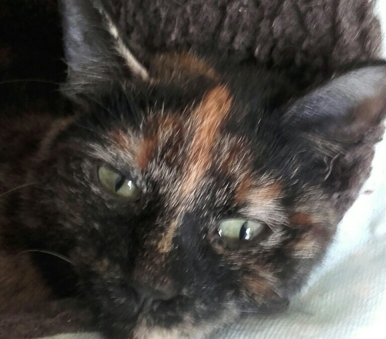 JASMINE – RE-HOMED