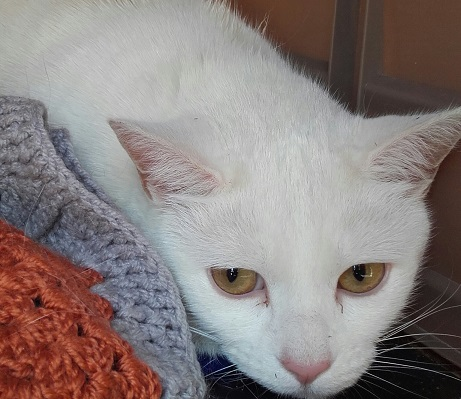 PATSY – NOW RE-HOMED